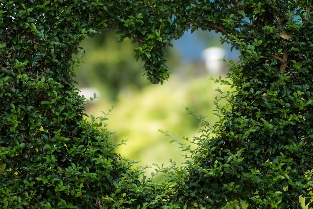 Heart shaped cut out of a bush
